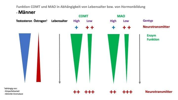 Wirkung beim mann östrogen Phytoöstrogene: Auswirkungen
